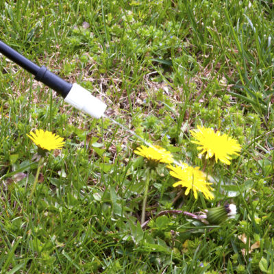 how to get rid of crabgrass and other weeds