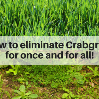 How to eliminate crabgrass on your lawn once and for all