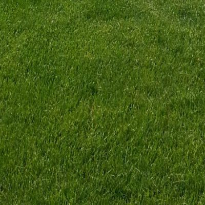 Ideal height for grass - Fairfield County CT