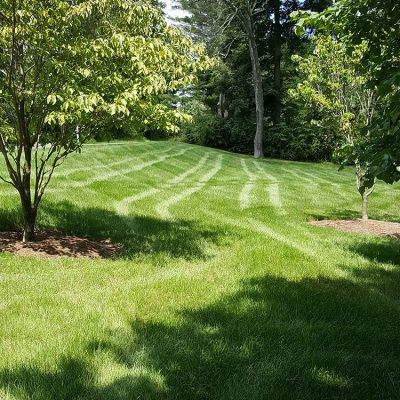 Watering your lawn: Shady vs Sunny areas of lawn - how best to water the different areas