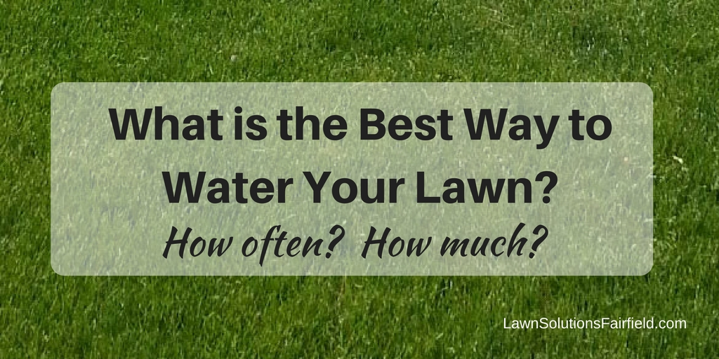 What is the best way to water your lawn in Fairfield County CT