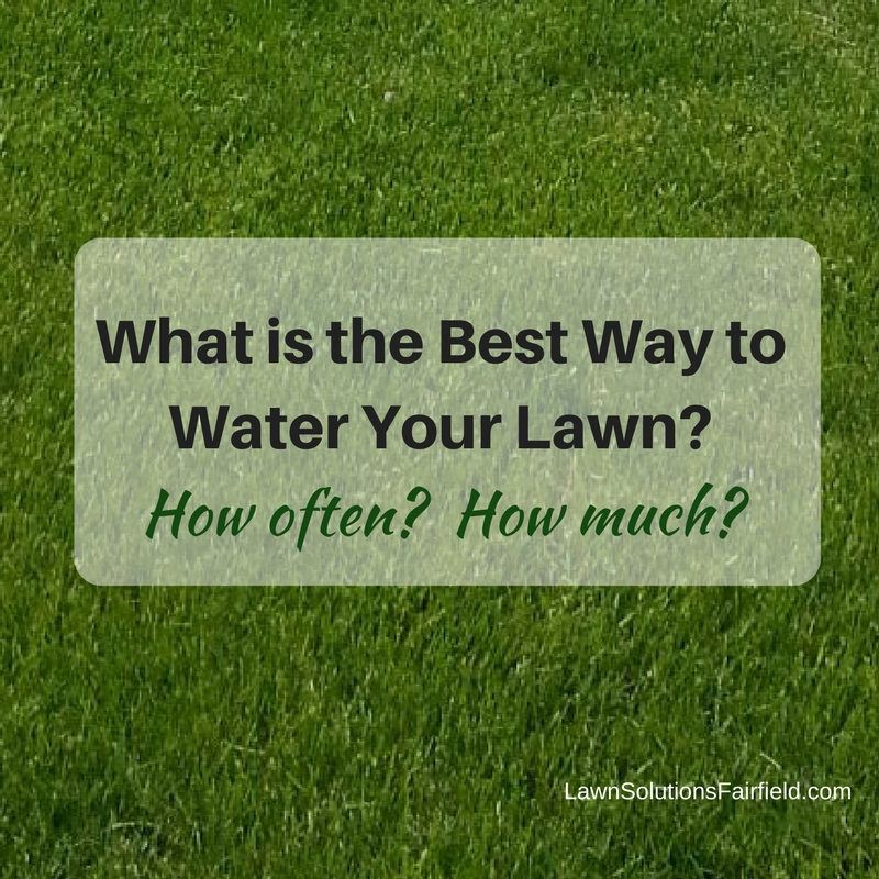 Watering your lawn - Best practices in Fairfield County CT