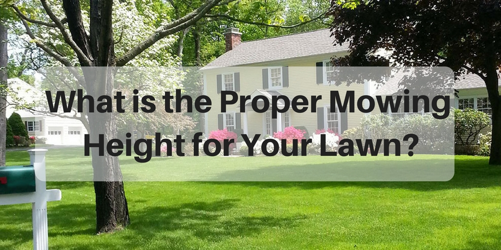 What is the proper moving height for your lawn
