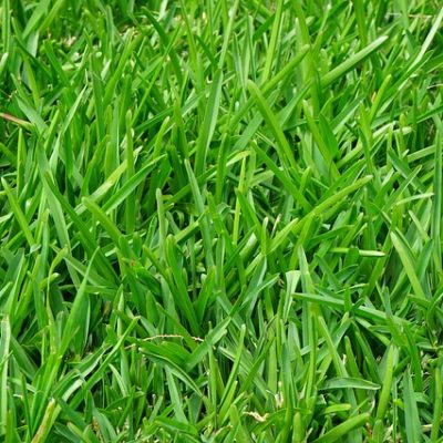 preventing crabgrass growth in Fairfield CT