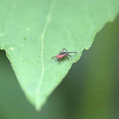 naturally prevent and control ticks in Fairfield, CT