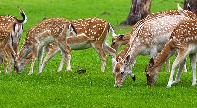 preventing deer on your lawn by using deer spray | Fairfield County CT