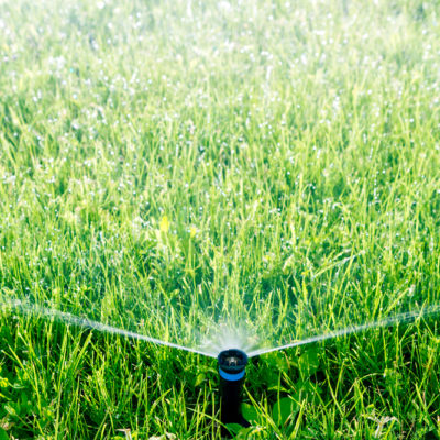 avoid watering lawn too frequently - how to avoid crabgrass from growing