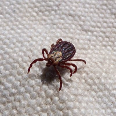 tick prevention and tips in Fairfield County CT