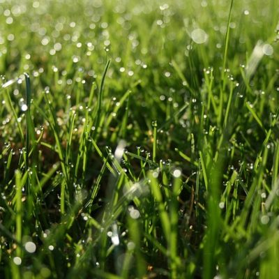 mistakes homeowners make while watering their lawns   Fairfield CT