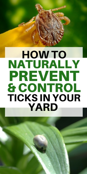 how to stop ticks in your yard