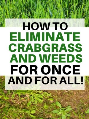 How To Eliminate Crabgr On Your Lawn Once And For All